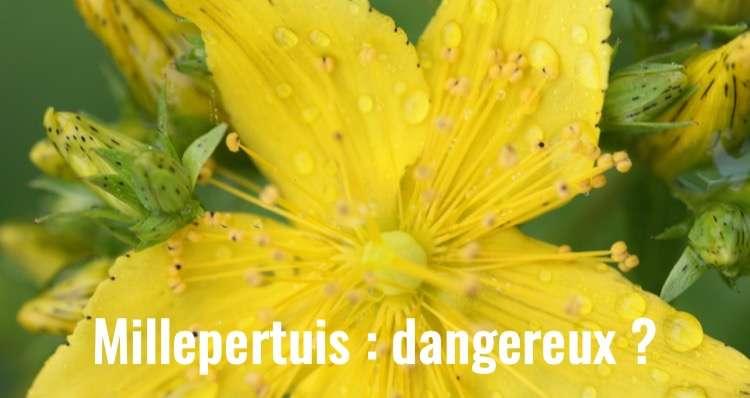 Fleur de millepertuis